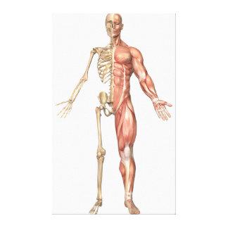 前部人間の骨組および筋肉システム キャンバスプリント
