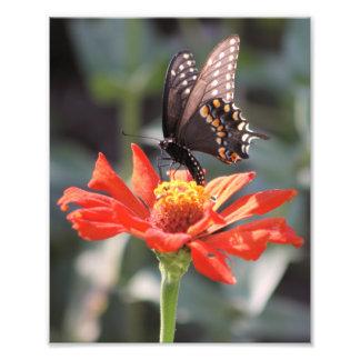 劇的な1枚の蝶写真 フォトプリント