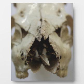 動物のスカルの写真 フォトプラーク