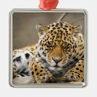 動物のヒョウパターン平和愛自然の運命 メタルオーナメント