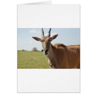 動物の態度 カード