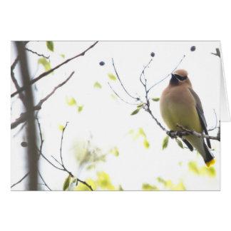 動物の鳥のヒメレンジャク カード