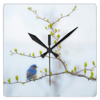 動物の鳥の東のブルーバード スクエア壁時計