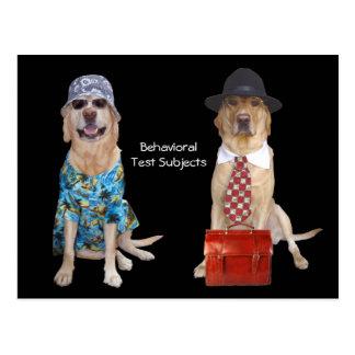 動物または実験室または犬の行動の勉強 ポストカード