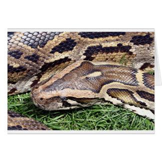 動物園、アリゾナ、米国の大蛇 カード
