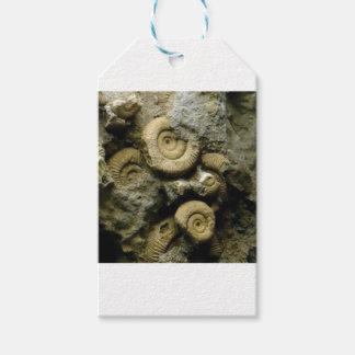 化石のかたつむりの円 ギフトタグ