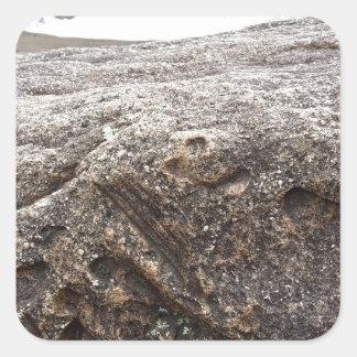 化石の石 スクエアシール