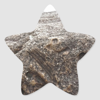 化石の石 星シール