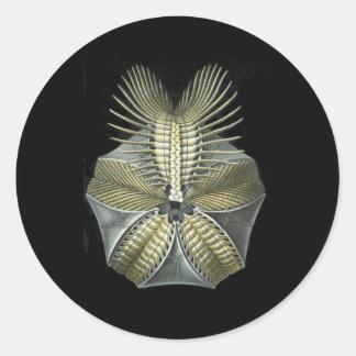 化石の雲丹 ラウンドシール