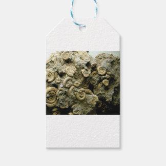 化石は芸術を殻から取り出します ギフトタグ