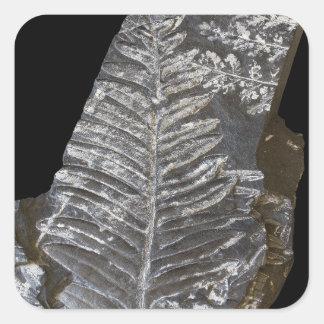 化石化されたシダは黒の写真を去ります スクエアシール