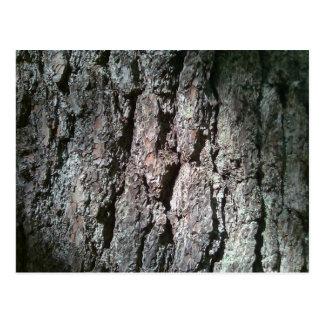 北の松の木の吠え声 ポストカード
