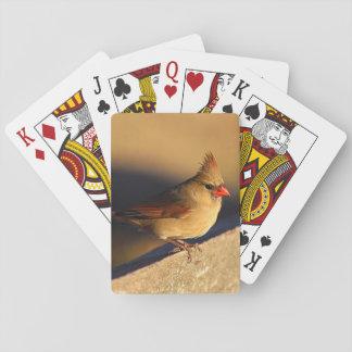 北の(鳥)ショウジョウコウカンチョウ トランプ