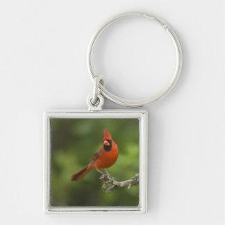 北の(鳥)ショウジョウコウカンチョウ、Cardinalisのcardinalis、 キーホルダー