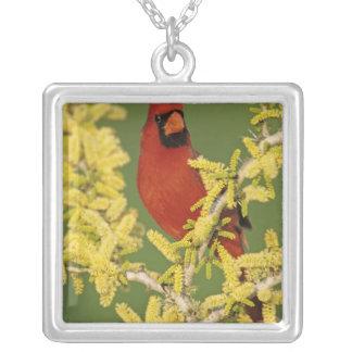 北の(鳥)ショウジョウコウカンチョウ、Cardinalisのcardinalis、男性 シルバープレートネックレス