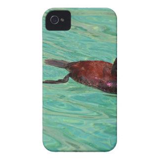 北アメリカのアカオタテガモII Case-Mate iPhone 4 ケース