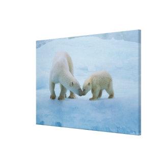 北アメリカのカナダの北極。 白くま キャンバスプリント