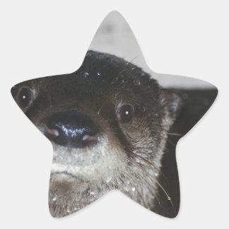 北アメリカの川カワウソ 星シール