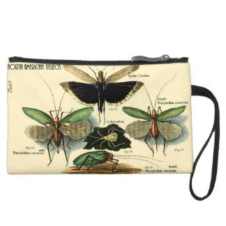 北アメリカの昆虫シリーズコオロギ