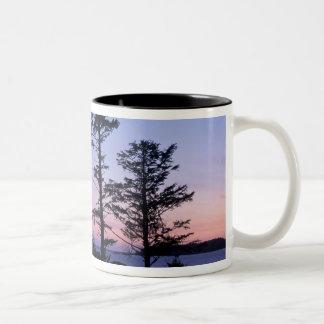 北アメリカ、カナダのバンクーバー島、木 ツートーンマグカップ