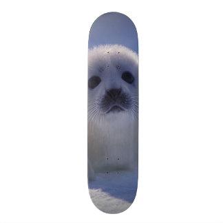 北アメリカ、カナダ、ケベックのIles deのla スケートボード