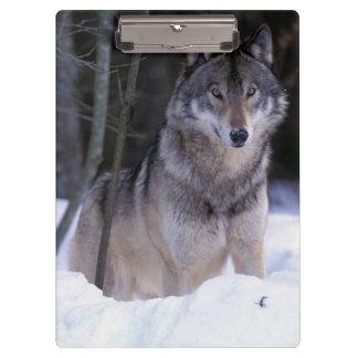 北アメリカ、カナダ、東のカナダのオオカミ クリップボード