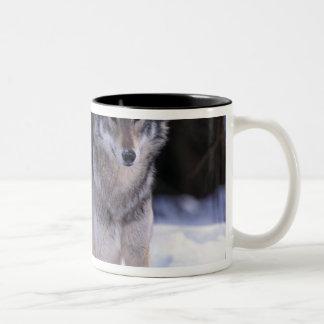 北アメリカ、カナダ、東のカナダのオオカミ ツートーンマグカップ