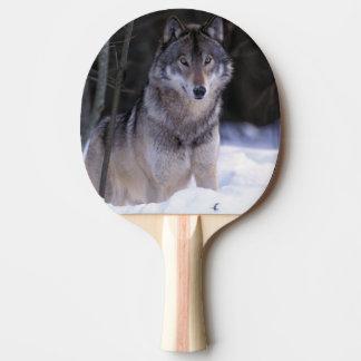 北アメリカ、カナダ、東のカナダのオオカミ 卓球ラケット