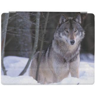 北アメリカ、カナダ、東のカナダのオオカミ iPadスマートカバー