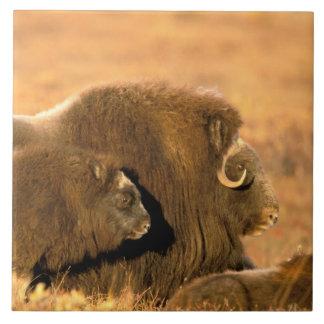 北アメリカ、米国、アラスカの北極国民 正方形タイル大