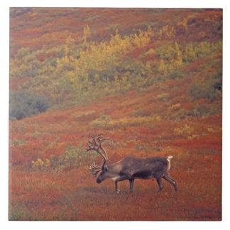 北アメリカ、米国、アラスカ、Denali NPのツンドラ タイル