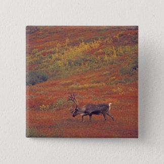 北アメリカ、米国、アラスカ、Denali NPのツンドラ 5.1cm 正方形バッジ