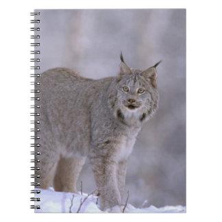 北アメリカ、米国、アラスカ、Haines。 オオヤマネコ(ネコ属 ノートブック