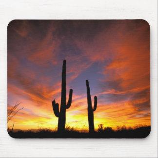 北アメリカ、米国、アリゾナのSonoranの砂漠 マウスパッド