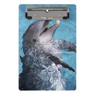 北アメリカ、米国、ハワイ。 イルカ2 ミニクリップボード