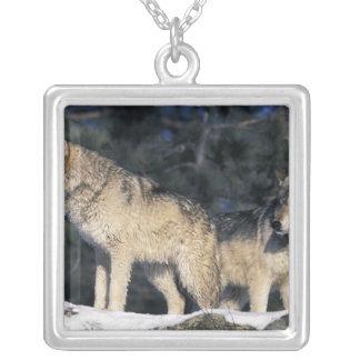 北アメリカ、米国、ミネソタ。 オオカミのイヌ属2 シルバープレートネックレス