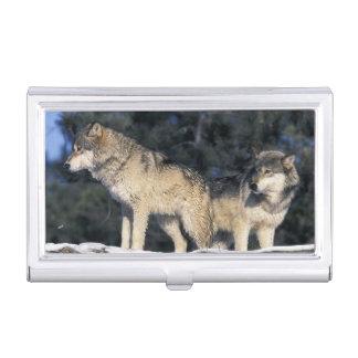 北アメリカ、米国、ミネソタ。 オオカミのイヌ属2 名刺入れ