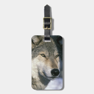 北アメリカ、米国、ミネソタ。 オオカミのイヌ属3 ラゲッジタグ