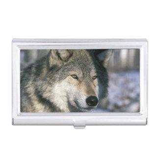 北アメリカ、米国、ミネソタ。 オオカミのイヌ属3 名刺入れ