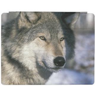 北アメリカ、米国、ミネソタ。 オオカミのイヌ属3 iPadスマートカバー