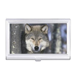 北アメリカ、米国、ミネソタ。 オオカミのイヌ属 名刺入れ