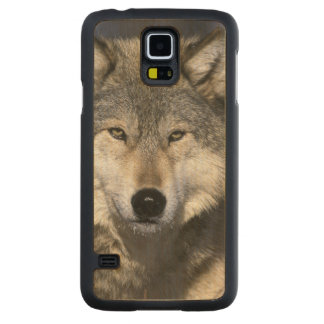 北アメリカ、米国、ミネソタ。 オオカミのイヌ属 CarvedメープルGalaxy S5スリムケース