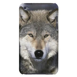 北アメリカ、米国、ミネソタ。 オオカミのイヌ属 Case-Mate iPod TOUCH ケース
