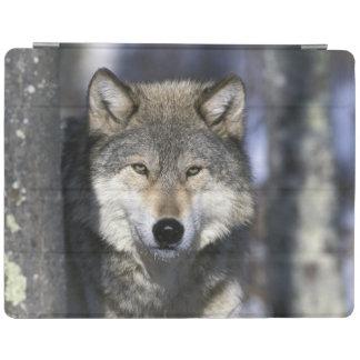 北アメリカ、米国、ミネソタ。 オオカミのイヌ属 iPadスマートカバー