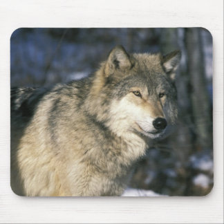 北アメリカ、米国、ミネソタ。 オオカミ(イヌ属2 マウスパッド