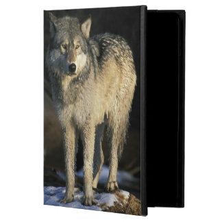 北アメリカ、米国、ミネソタ。 オオカミ(イヌ属 iPad AIRケース
