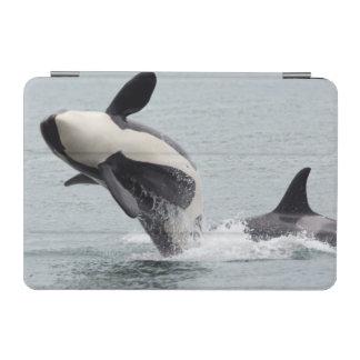 北アメリカ、米国、ワシントン州、サンファン iPad MINIカバー