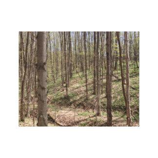 北ミシガン州の森の春 キャンバスプリント