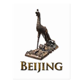 北京の孔雀 ポストカード