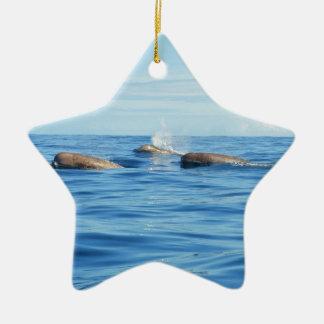 北大西洋のトックリクジラ属 セラミックオーナメント